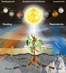 biodinamisch